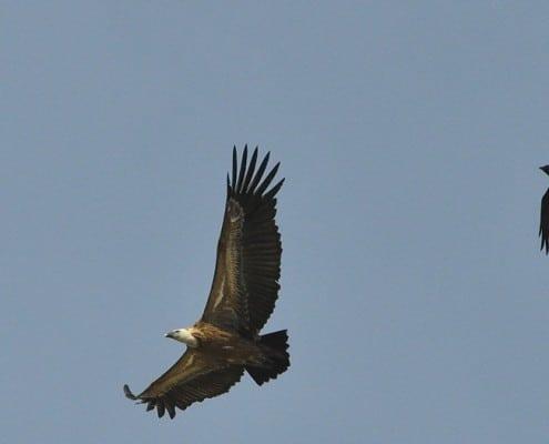 ornitologia parque natural de los alcornocales, avistamiento de aves parque natural de los alcornocales, birding, ornitología velair adventures