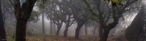 Senderismo en la Sierra de La Plata Parque los Alcornocales