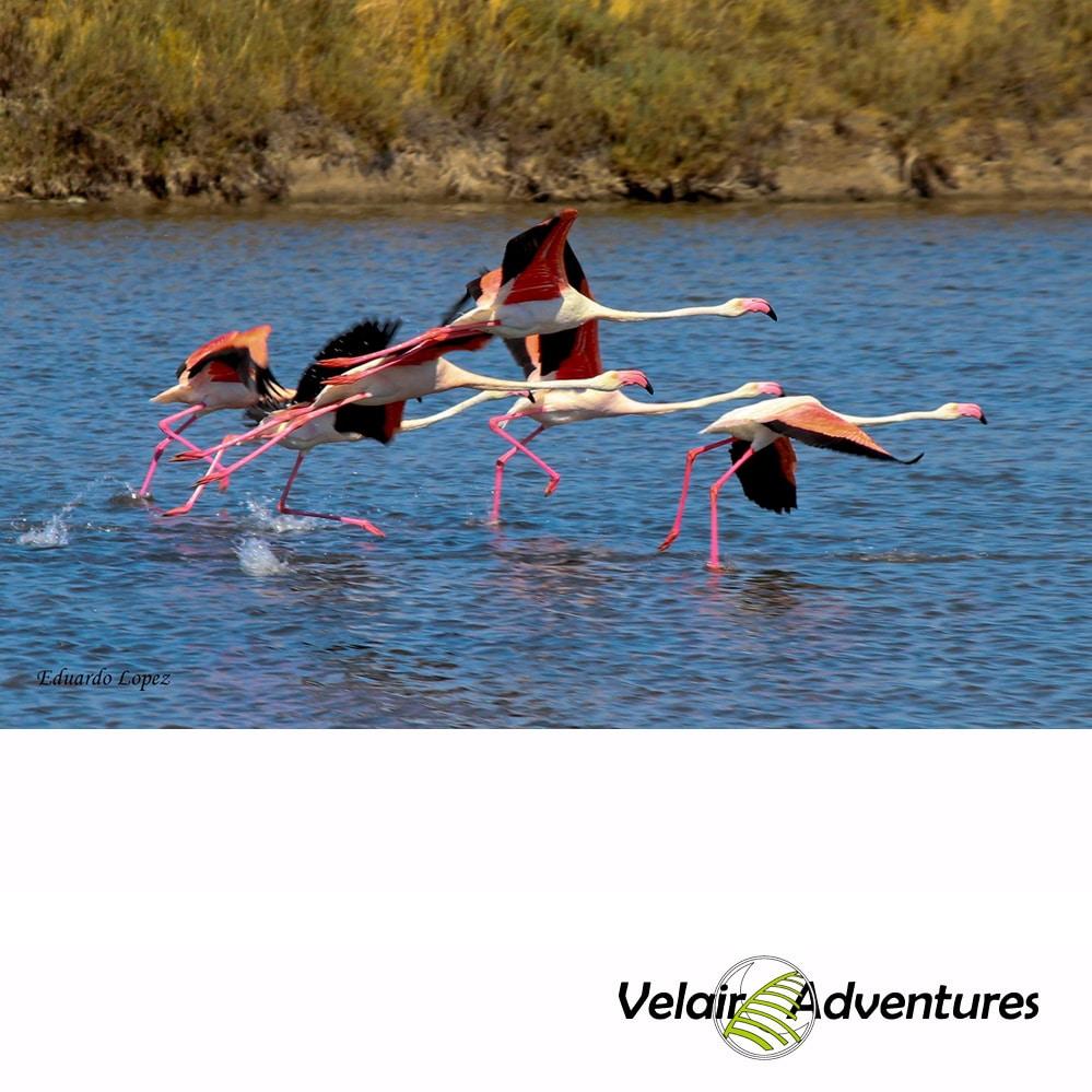 Actividad Birding Parque Natural La Breña y Marismas de Barbate Cadiz Velair Adventures, Ornitologia Cadiz