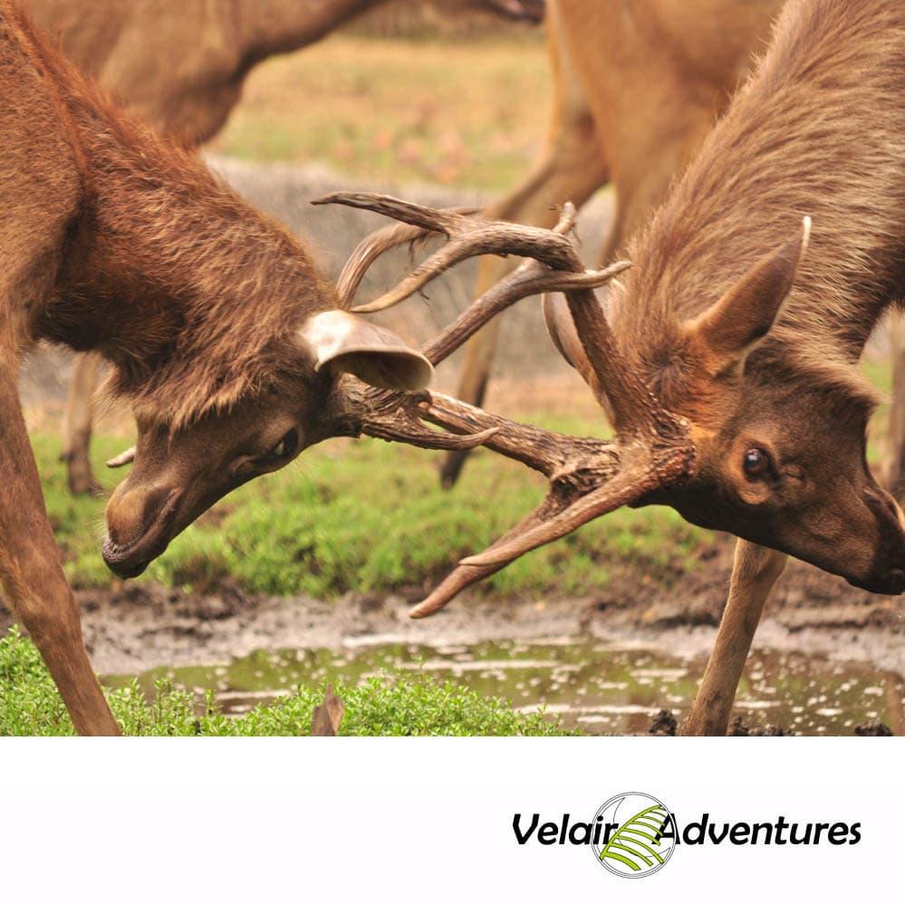Ruta_4x4_Andalucia_Estrecho_Birding_Morocco_Tarifa_cadiz_rutas con encanto_Velair Adventures_bERREA(6)